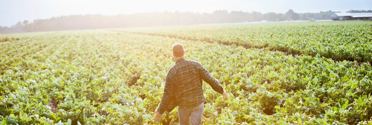 El sector agrario. Su reivindicación